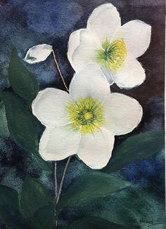 Watercolour Christmas Rose, Watercolour, Plants, Painting, Watercolor, Watercolor Painting, Painting Art, Flora, Paintings