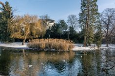 Wintertime Vienna / Lake by ChristianThür Photography on Creative Market Winter Time, Vienna, Austria, Swan, Swimming, River, Business Brochure, Photography, Outdoor