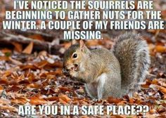 I've noticed the squirrels are beginning to gather nuts for the winter. A couple of my friends are missing. Are you in a safe place?
