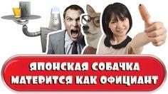 Японская собачка матерится как официант - Итоги недели