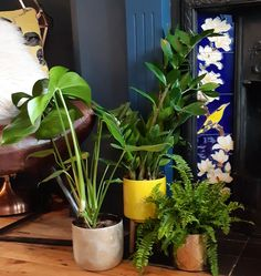 Sitting room renovation. Victorian fireplace tiles. House plants Victorian Fireplace Tiles, Victorian Rooms, Interior Plants, House Plants, Fireplaces, Maid, Green, Heaven, Instagram
