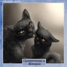Next contest is to draw nightcloud and breezepelt. If u want to add crowfeather that's fine ^^ due on may 11th