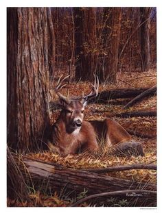 Deer In Leaves by Kevin Daniel art print