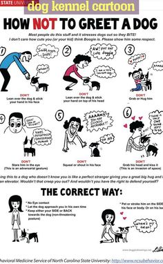 Dog Care Tips, Pet Care, Pug Cartoon, Dog Body Language, Dog Quotes Love, Dog Facts, Best Dog Training, Happy Puppy, Pokemon