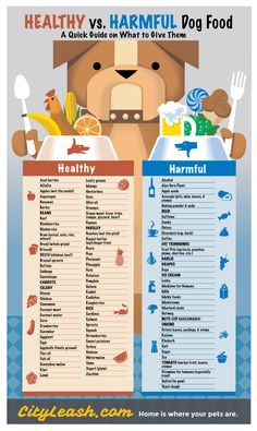 """Healthy vs Harmful Food for your Dogs"" infographic by @CityLeash.  *** A note about Human Medications ... Yes, your veterinarian may prescribe many medications for your dog that are also used for humans. In some instances, they may even recommend over-the-counter options found in a drug store. The key thing here however is talking to your veterinarian! Get their opinion BEFORE giving your dogs any medication. Diy Dog Treats, Food Charts, Dog Care, Dog Food Recipes, Dog Recipes, Food Tables, Dog Storage"