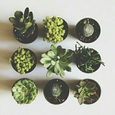 Most popular tags for this image include: plants, green, cactus, nature and grunge Do It Yourself Inspiration, Plants Are Friends, Plant Aesthetic, Cactus Y Suculentas, Cacti And Succulents, Succulents Tumblr, Succulents Drawing, Cactus Drawing, Houseplants