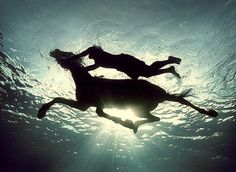 Swimming with horses is amazing! Photo by Zena Holloway Tags: horse, photography, silhouette, swimming, Zena Holloway The Scorpio Races, Amor Animal, Underwater Photographer, Horse Silhouette, Am Meer, Jolie Photo, Heroes Of Olympus, Open Water, Horse Photography