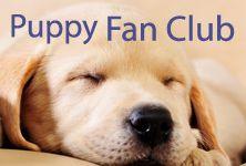 Fish4Puppies Fan Club Labrador Retriever, Survival, Puppies, Dogs, Animals, Labrador Retrievers, Cubs, Animales, Animaux