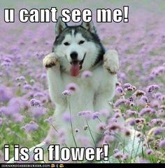 Husky flower