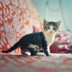 TOP 42 Cats and Kittens Pictures