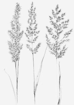 Set 4 spikelet sketch Botanical Art Print Hygge digital stamp clipart one line drawing grass artwork wild herb black white plant Botanical Tattoo, Botanical Drawings, Botanical Prints, Botanical Line Drawing, Tatoo Tree, Grass Drawing, Drawing Flowers, Tattoo Line, Plant Sketches
