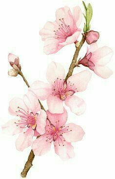 Color cherry blossom