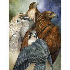 This painting represents what I feel are the greatest of each raptor group - the red-tailed hawk for the buteos, the northern goshawk for the