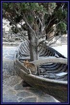 Cadaques, Spain (port lligat catalunya tree) - a photo by Olga Mallol