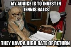 Funny Dog Tennis Ball Financial Advice Meme