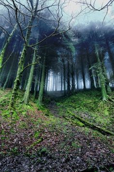 """90377:  """" Macclesfield Forest by Mark Rickaby  """""""