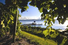 Goose Watch Winery on Cayuga Lake in the picturesque Finger Lakes Wine Country is home to one of the most unique collections of award winning wines in New York State! Finger Lakes Wineries, Summer Events, Lake View, Wine Country, The Great Outdoors, Scenery, Places To Visit, Around The Worlds, York
