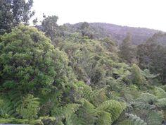 Forest beauty...Waitakere Ranges