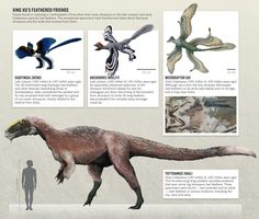 Xing Xu's feathered dinosaur discoveries in China, including Yutyrannus Huali, a large predator (three specimens: one adult 9m long and two juveniles with feathers on neck, hips, and back.