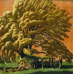 Gustav Baumann woodcut of Cotten wood tree