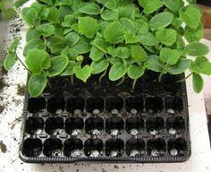 vysev okurek Gardening, Lawn And Garden, Horticulture