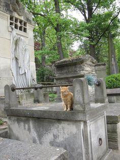 Katze auf dem Friedhof Pere Lachaise  Cat, Cimetiere du Pere Lachaise,   Cemetery