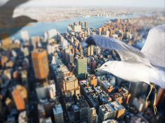 Soaring Above the World from a Bird's Perspective - My Modern Metropolis