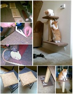 How we made our DIY wall-mounted cat tree