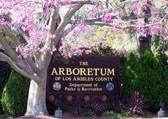 Los Angeles County Arboretum, California.