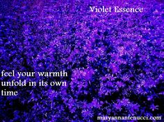 Violet essence has a way of giving us extra time to shine; we feel our warmth unfold in its own time. Its gift is acceptance of who we are, the way we are.