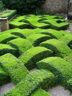 UK - Old Washington - Decorative Box Hedge in Garden Topiary Garden, Garden Art, Garden Design, Box Garden, Formal Gardens, Outdoor Gardens, Landscape Architecture, Landscape Design, Box Hedging