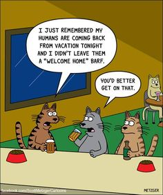 Funny cartoons of cats interacting with their environments by Scott Metzger. Cat Jokes, Funny Cat Memes, Funny Cartoons, Cats Humor, Memes Humor, Crazy Cat Lady, Crazy Cats, Funny Animal Pictures, Funny Animals
