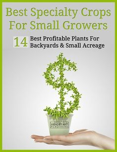 Best Specialty Crops for Small Growers free eBook on Profitable Plants Digest (to the left of the main article) at http://www.profitableplantsdigest.com/top-10-faqs-about-growing-lavender-for-profit/