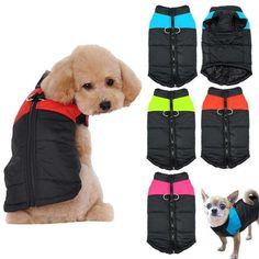 Big Dogs, Large Dogs, Small Dogs, Cute Dogs, Dog Vest, Dog Hoodie, Large Dog Clothes, Dog Spay, Dog Safety