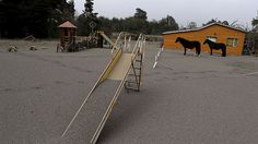 Horses are seen at a playground area covered with ash from Calbuco volcano at Ensenada town near Puerto Varas city April 23, 2015 (Reuters / Ivan Alvarado)