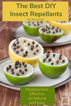 Lemon And Limes With Cloves - Natural Insect Repellent Stock Photo - Image of brown, fruit: 32440492 Best Insect Repellent, Natural Mosquito Repellant, Mosquito Repelling Plants, Keep Bugs Away, Pest Control, Natural Living, Natural Remedies, Herbalism, Insects