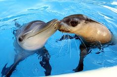 Jet And Miri: A Love Story That Is All Wet  ... see more at PetsLady.com ... The FUN site for Animal Lovers
