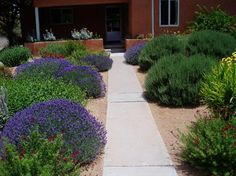 Waterwise Landscapes - contemporary - landscape - albuquerque - by Waterwise Landscapes Incorporated
