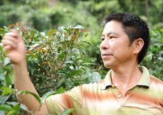 Tea Master You Le mountain Yunnan China