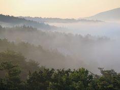 山中湖の朝霧