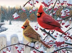 cardinals-birds-winter - trees, birds, berries, fencee, snow, white, cardinals, winter, red