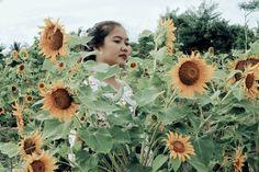 Sunflower Garden Samas [Bantul]