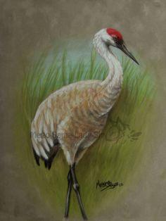 sandhill crane by Mego-Sama-Lady-Sir.deviantart.com on @DeviantArt
