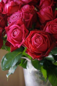 rose Emotion profondo