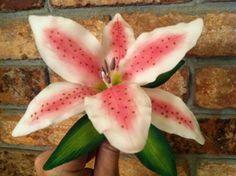 star gazer lily | Stargazer Lily from Wilton Course 4
