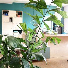 Un coin de verdure chez soi #madecoamoi , green home