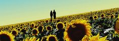 COUPLE SUNFLOWER PICTURES | Sunflowerwcouple.png Photo by masterright31 | Photobucket
