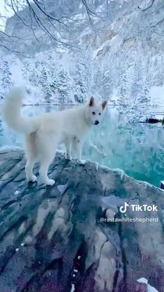 Spiritbath - Viral Stuff to Awaken Your Spirit Funny Animal Videos, Cute Funny Animals, Cute Baby Animals, Animals And Pets, Beautiful Places To Travel, Cool Places To Visit, Cute Puppies, Cute Dogs, Cute Stories