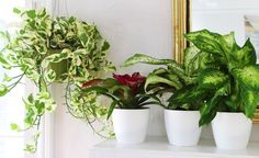 5 feng shui tips to make your home (or office) a haven of calm -- moral of the story: plants, lots and lots of plants