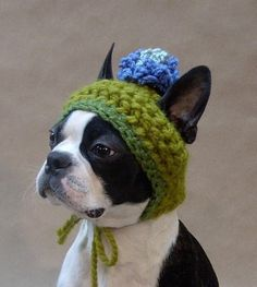 @wendyopsahl Ole and Lena should have hats like this. But.......... this dog looks like it is plotting revenge so maybe the hats aren't a good idea.